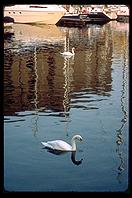 London - Swans - Jan 2002