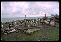 Southern Thule - Penguins - Jan 2002