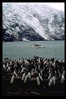 Southern Thule - RV Braveheart and penguins - Jan 2002