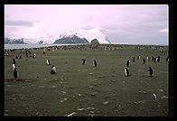 Southern Thule - Hewsion point - Jan 2002