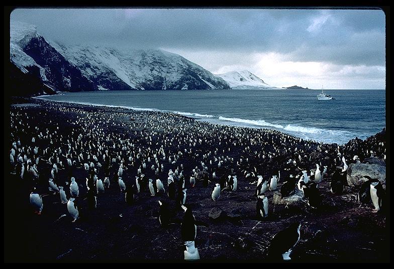 southern-thule-braveheart-penguins-9.3.jpg